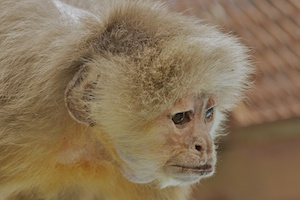 Fauna Foundation Monkeys - Sophie